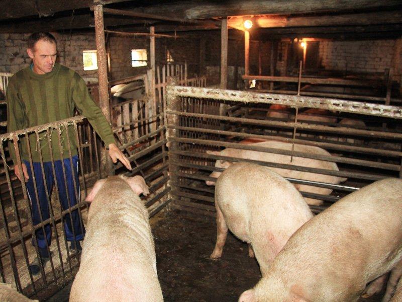 Строим двор для скота