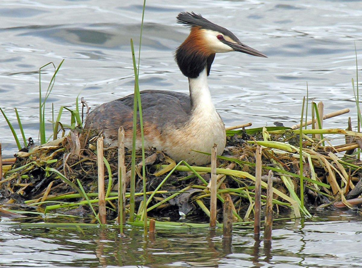 водоплавающей птицы картинки с названиями здесь все зависит