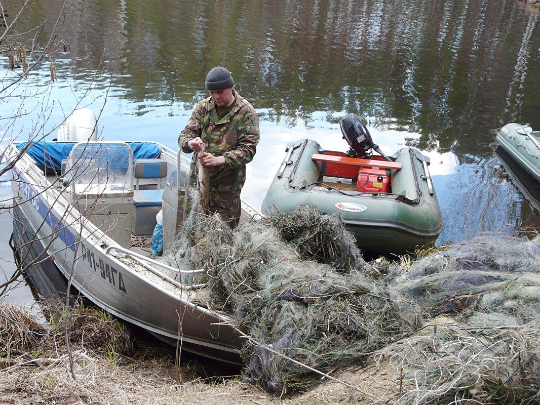 сроки ловли рыбы в великом новгороде